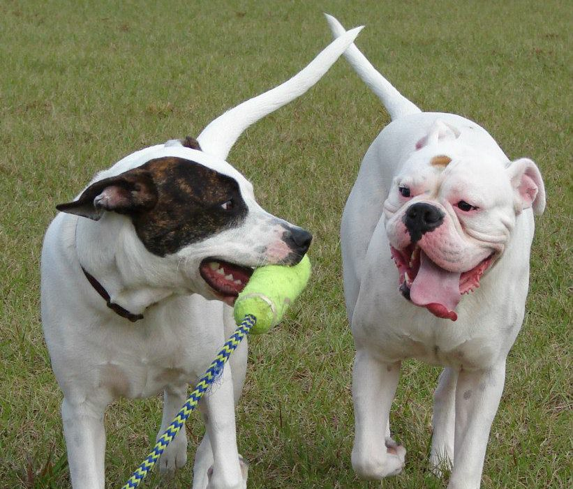 SWFL Modern Dog Training